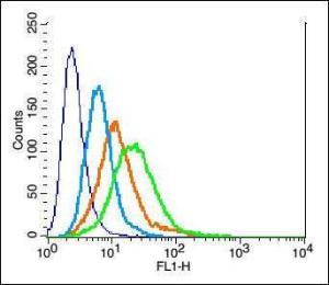 Anti-TNFRSF12A Rabbit Polyclonal Antibody
