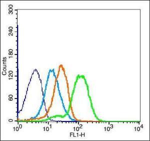 Anti-VCAM1 Rabbit Polyclonal Antibody